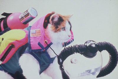scuba-cat-4