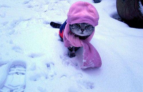 cat_1252340i