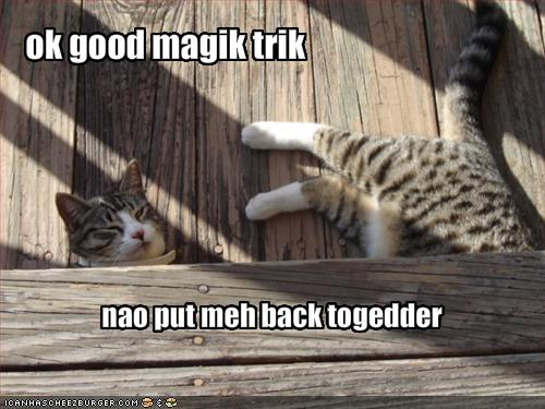 funny-pictures-cat-wants-an-end-to-your-magic-trick