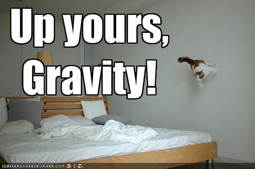 funny-pictures-this-cat-defies-gravity
