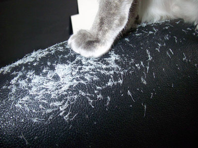Cat_shred