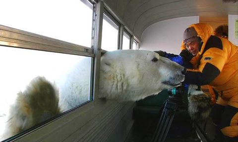 Polar-Bear-Bus